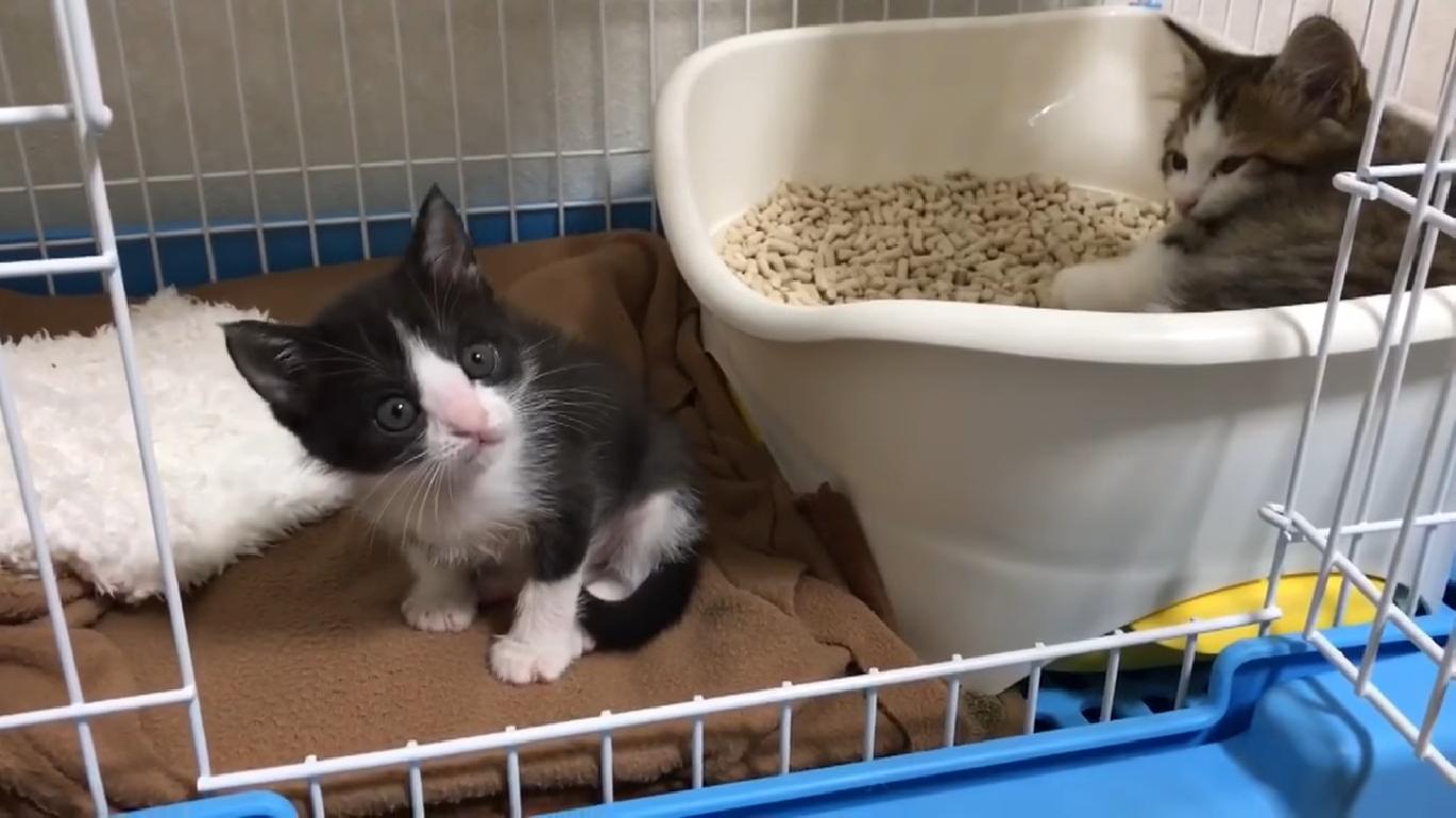 おすすめの子猫用トイレ
