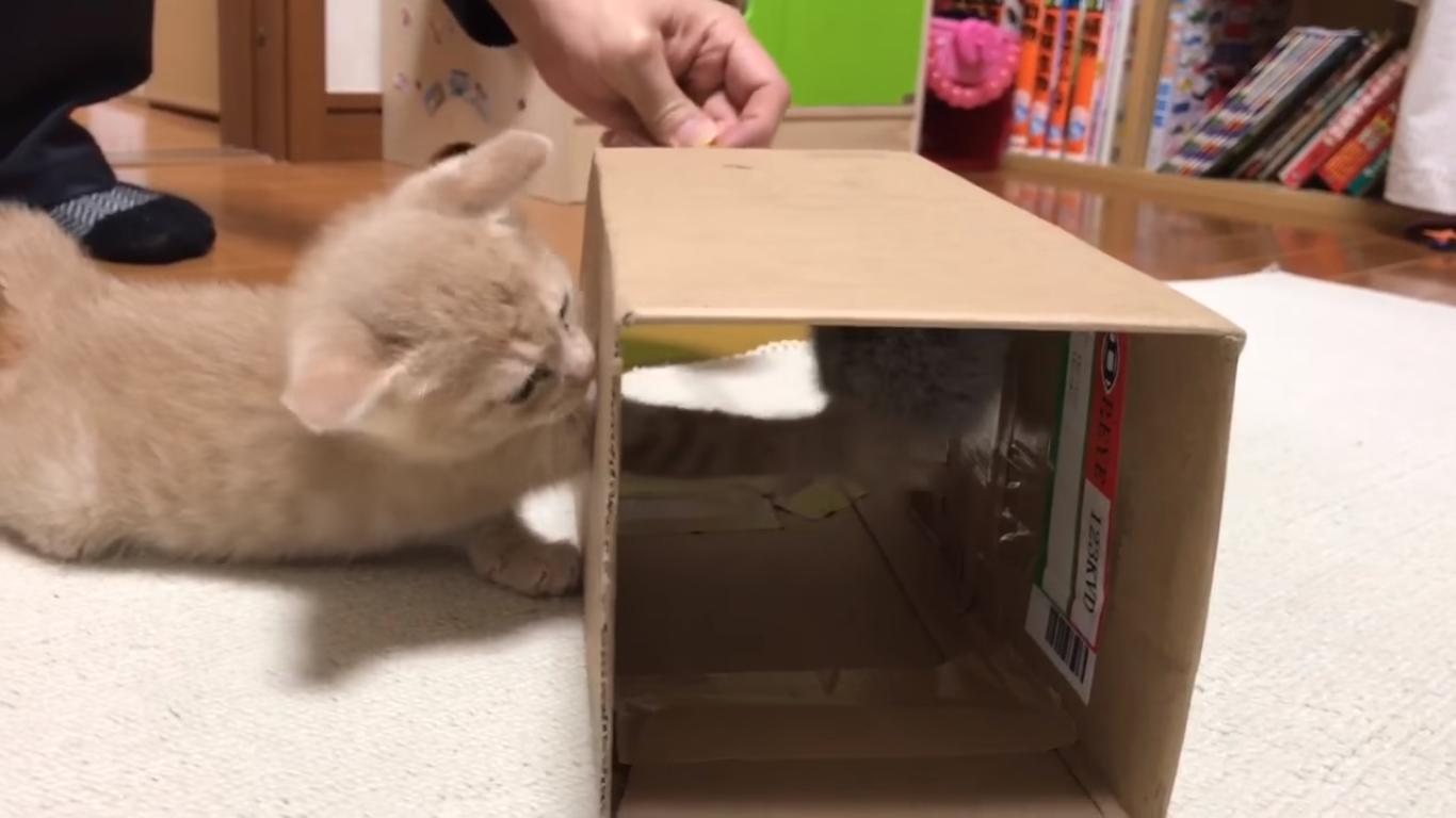 箱の上でプルプルする子猫に悲劇が・・・