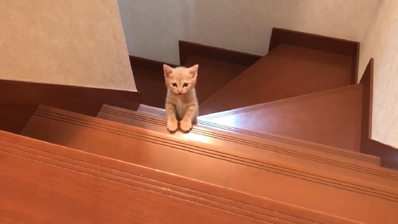 階段を上り切った子猫が満足そう