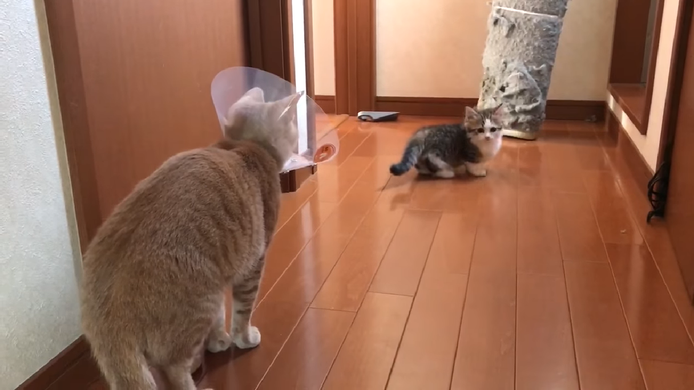子猫の階段チャレンジを見守るひのき
