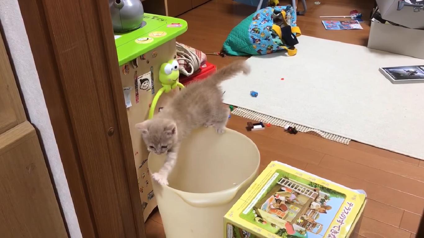 みんなの期待に応えてくれる子猫ひのき