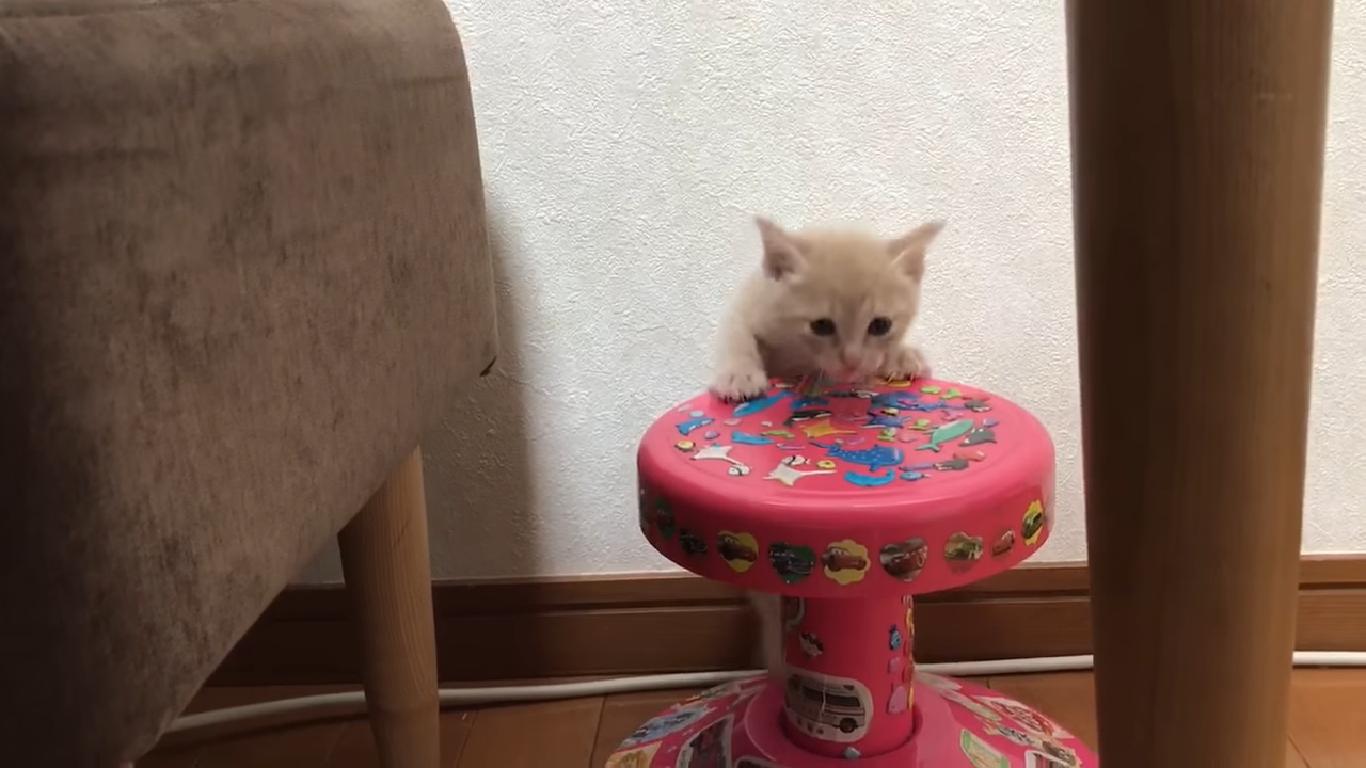 初めて椅子に登ったひのき