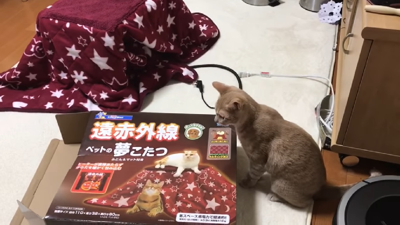猫用のこたつ