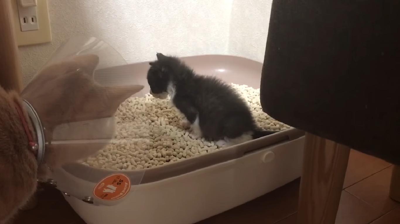 猫のしつけについて