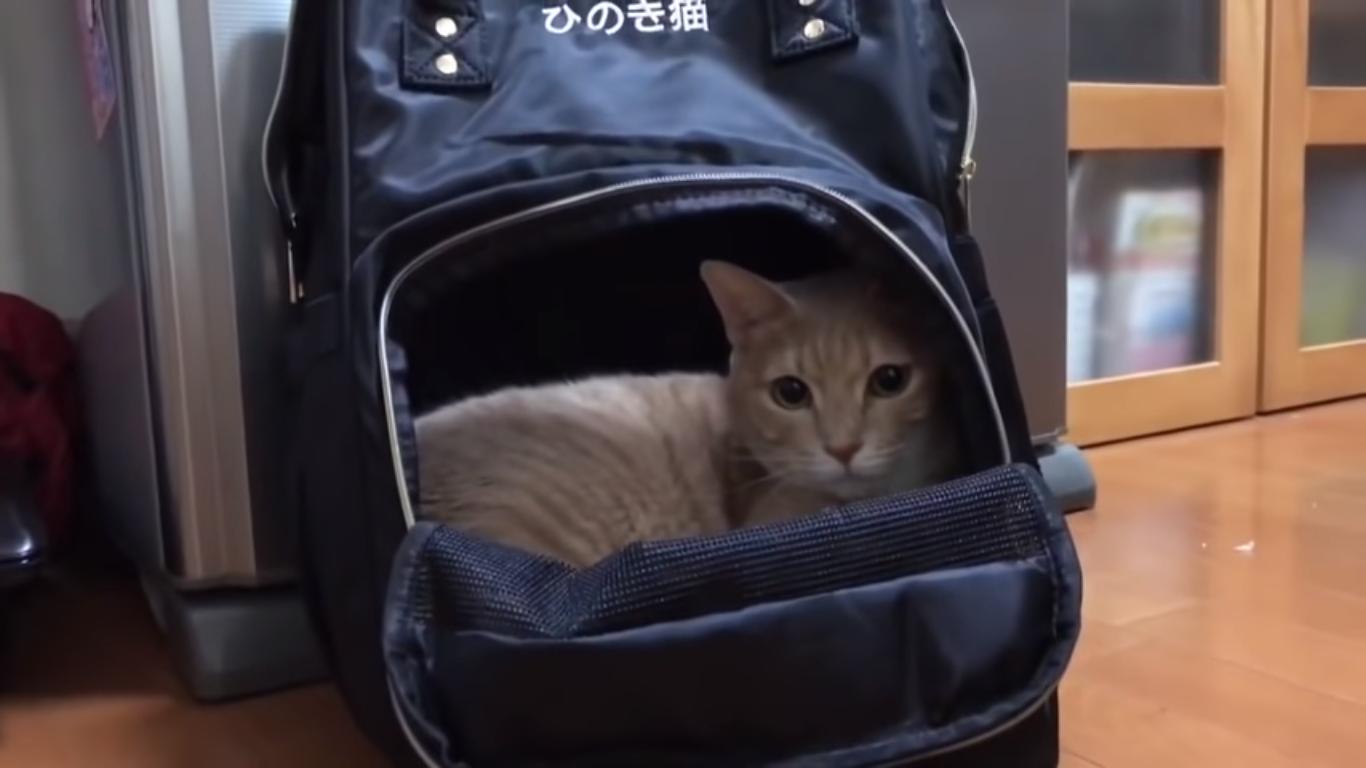 ネーム入り猫用キャリーケース