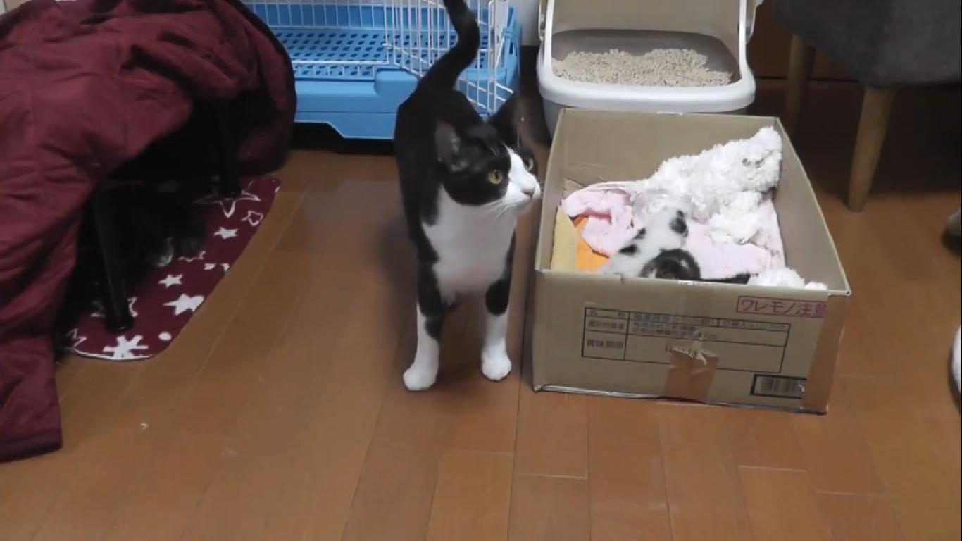 子猫のお引越し