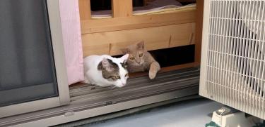 猫とベランピングをしようと考え中