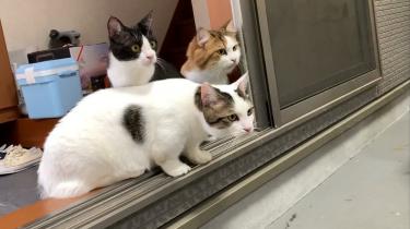 猫とお家キャンプの動画を公開しました